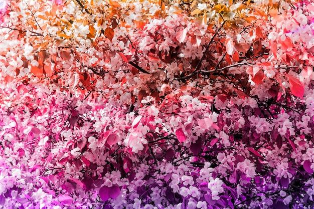 Pano de fundo em tons naturais florescendo flores de apple tree springrime fundo brilhante