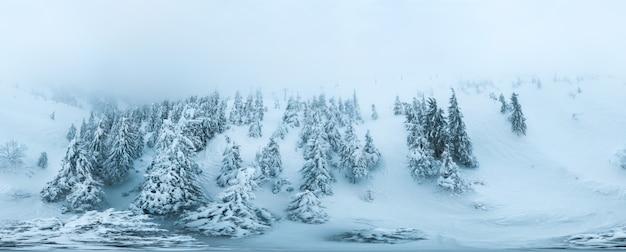 Panorama aéreo esférico coberto de neve de árvores spruce
