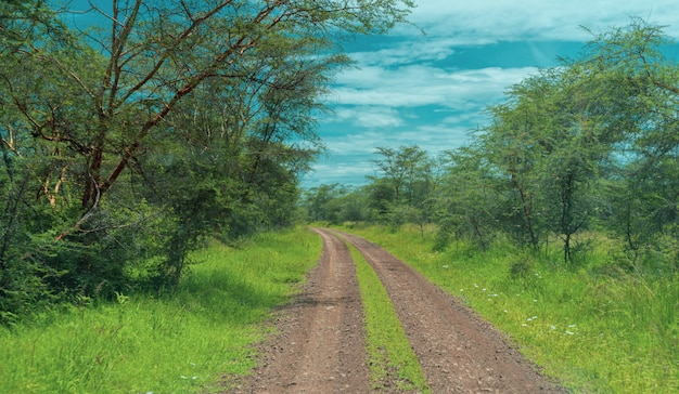 Panorama africano no parque nacional de serengeti