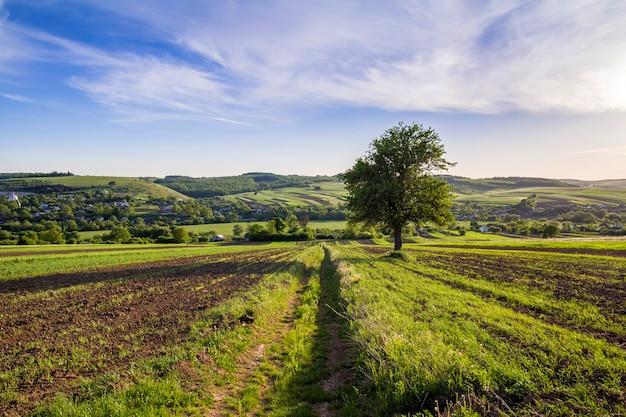 Panorama amplo da bela primavera pacífica de campos verdes, estendendo-se para o horizonte sob o céu azul brilhante claro com grande árvore verde em colinas distantes e fundo da aldeia. agricultura e conceito de agricultura.