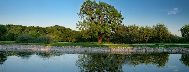 Panorama com majestoso carvalho perto da lagoa kolomenskoe moscou rússia