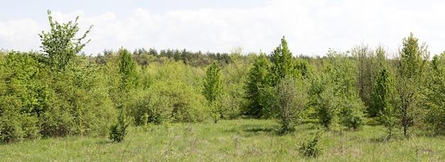 Panorama da floresta jovem