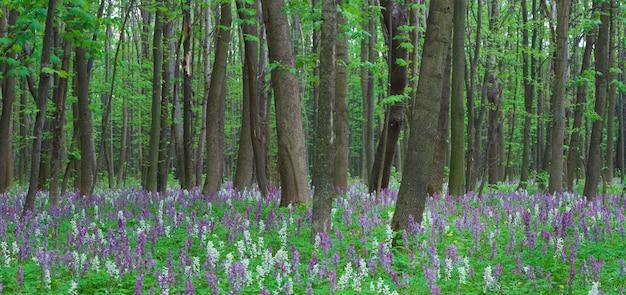Panorama da primavera. flores na floresta