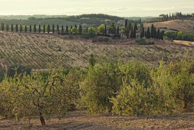 Panorama das colinas de san gimignano, toscana, na itália.