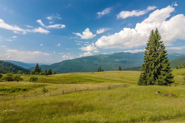Panorama das montanhas dos cárpatos no verão com pinheiro solitário em pé na frente e nuvens inchadas e cumes de montanha.