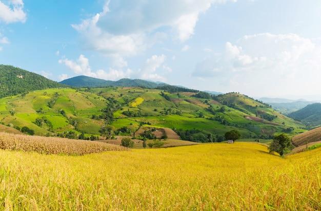 Panorama de campos verdes do arroz em terraced em tailândia.