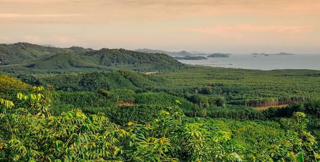 Panorama de vista para a montanha com árvore verde