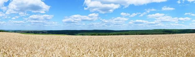 Panorama do campo de trigo