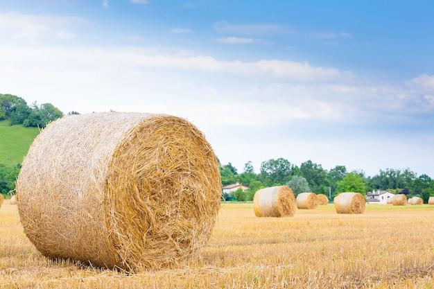 Panorama do campo italiano. fardos redondos no campo de trigo. agricultura, vida rural