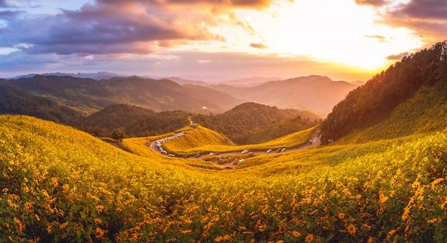 Panorama do parque florestal de tung bua tong ao pôr do sol