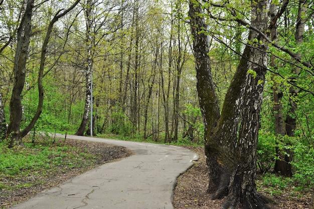 Panorama do parque. o beco de asfalto do parque no contexto das árvores. primavera no parque.