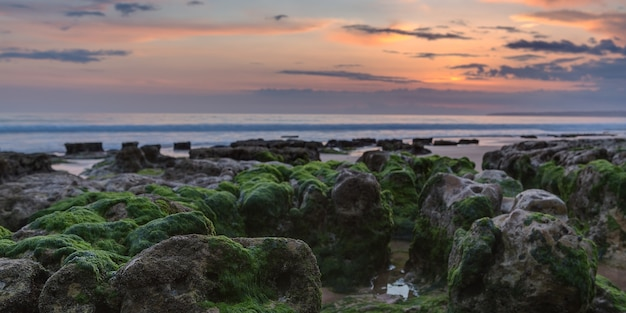 Panorama do pôr do sol na praia. algas nas rochas.