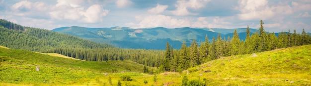 Panorama dos cárpatos bright mountain com floresta de abetos no verão