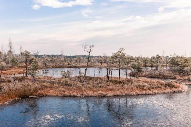 Panorama. manhã gelada no pântano levantado. kemeri national park, na letónia