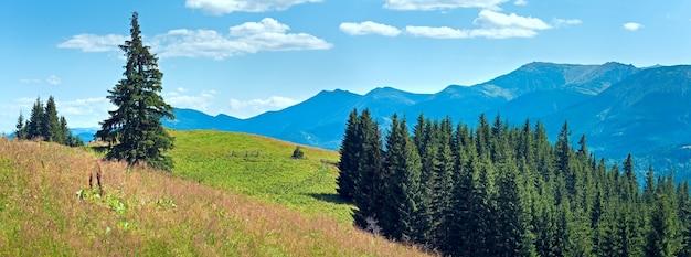 Panorama montanhoso do verão com pastagens floridas na frente e floresta de abetos na encosta (cárpatos, ucrânia).