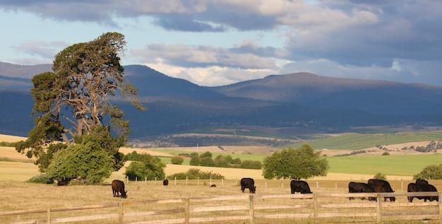 Panorama rural com montanhas