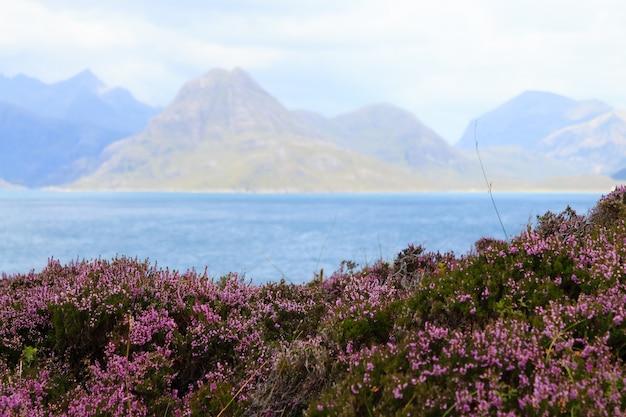Panorama rural da escócia. prados de erica arborea. destinos de viagem