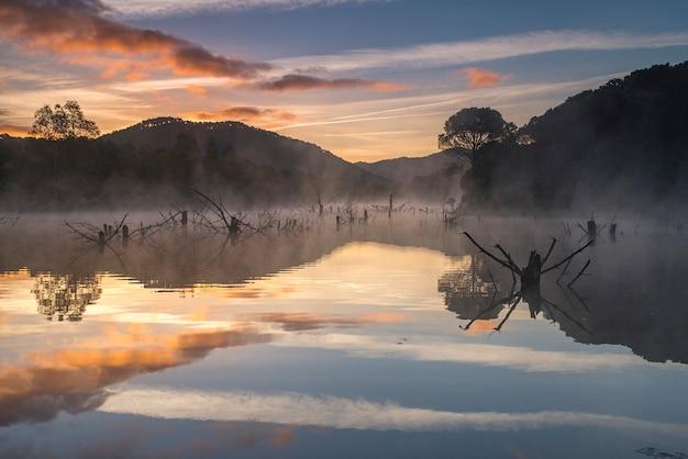 Pântano com árvores secas e nevoentas montanha com pinheiros e nevoeiro ao amanhecer