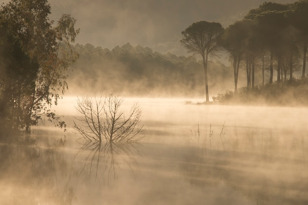 Pântano com pinheiros com os primeiros raios de sol e nevoeiro