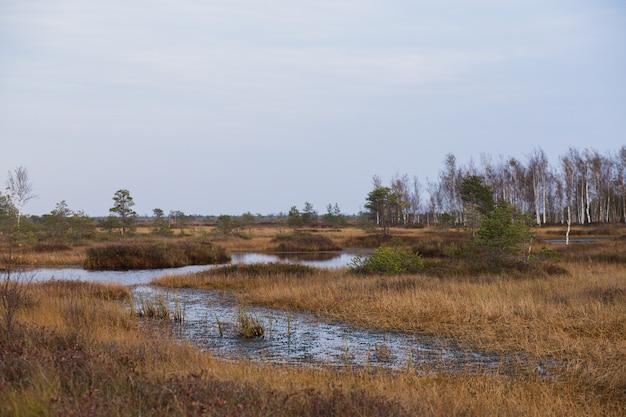 Pântano com riacho no outono