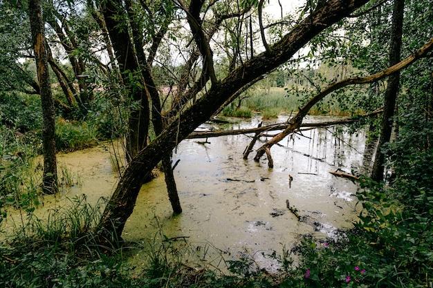 Pântano na floresta