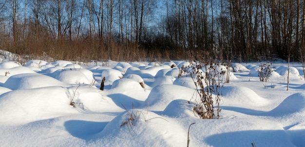 Pântano no inverno