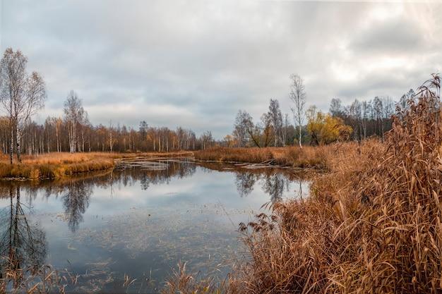 Pântano no norte no outono. Foto Premium