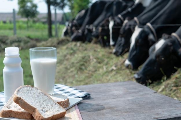 Pão com copo de leite e garrafa na mesa de madeira com leite fazenda e rebanho de vacas. fundo