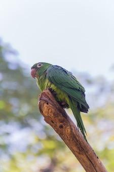 Papagaio ao ar livre em um parque no rio de janeiro, brasil.