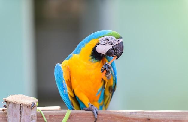 Papagaio arara, comer, cenoura, ligado, ramo,