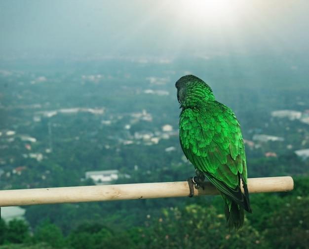 Papagaio assistindo a cidade se adaptar para se tornar um adorável animal de estimação.