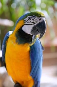 Papagaio bonito colorido