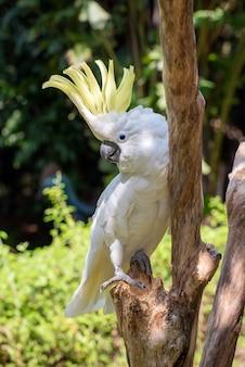 Papagaio branco em um galho de árvore