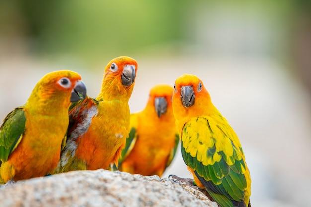 Papagaio canino e pássaro bonito