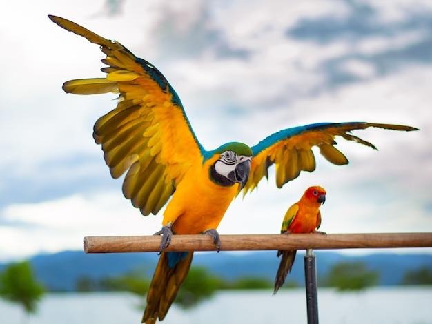 Papagaio colorido bonito