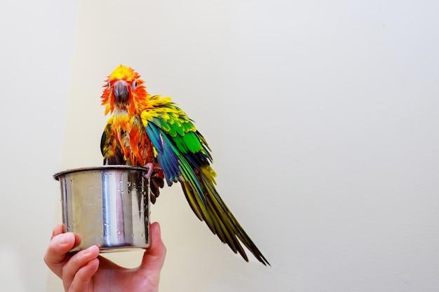Papagaio colorido pássaro sentado salpicos no banheiro