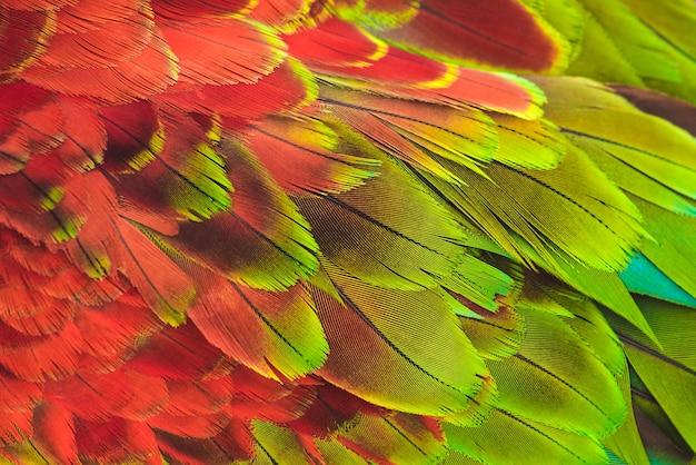 Papagaio de arara colorida. pluma.