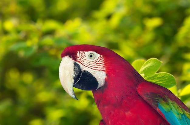 Papagaio macaw contra a natureza