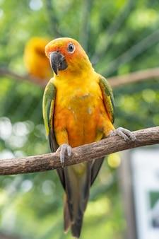 Papagaio na árvore ramo. Foto Premium