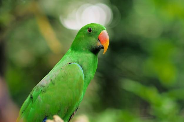 Papagaio na natureza, papagaio verde de perto