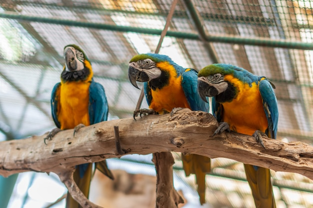 Papagaio no zoológico