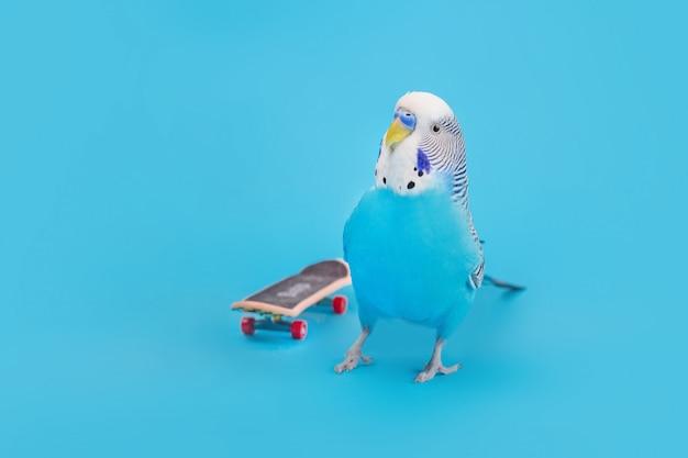 Papagaio ondulado no skate