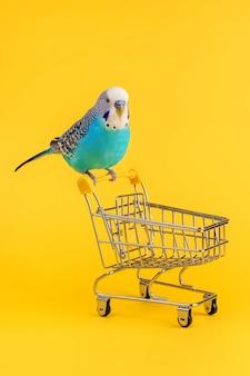 Papagaio ondulado sentado no mini carrinho de compras