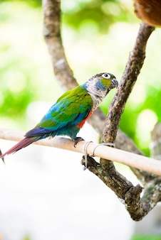 Papagaio, papagaio colorido, papagaio arara, arara colorida