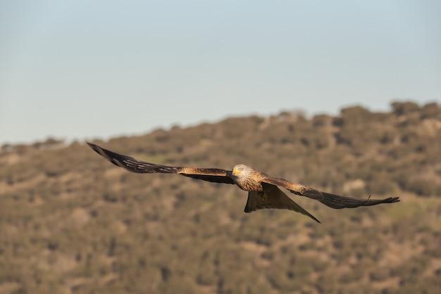 Papagaio real voando sobre o céu com uma paisagem em segundo plano