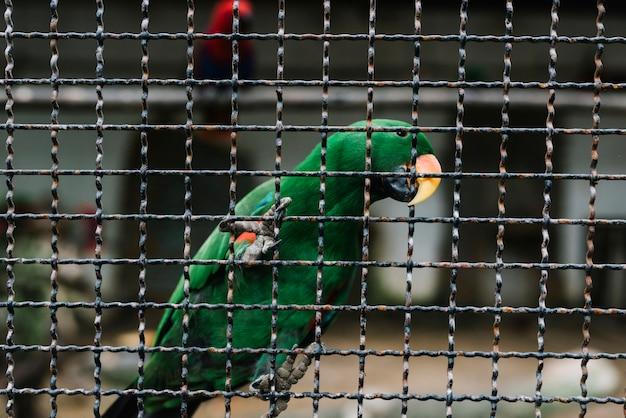 Papagaio verde clasping em uma cerca de metal