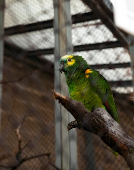 Papagaio verde fotografado, que mora no zoológico