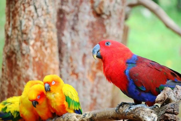 Papagaio vermelho e azul que olha algo em uma vara de madeira com pouco papagaios que dorme.