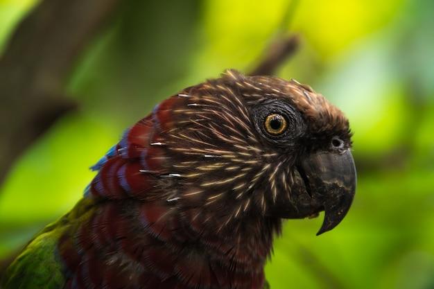 Papagaio vermelho e verde exótico close-up