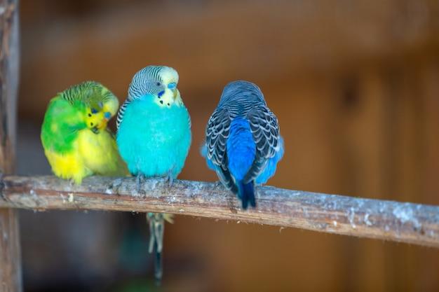 Papagaios coloridos em uma gaiola em um zoológico.